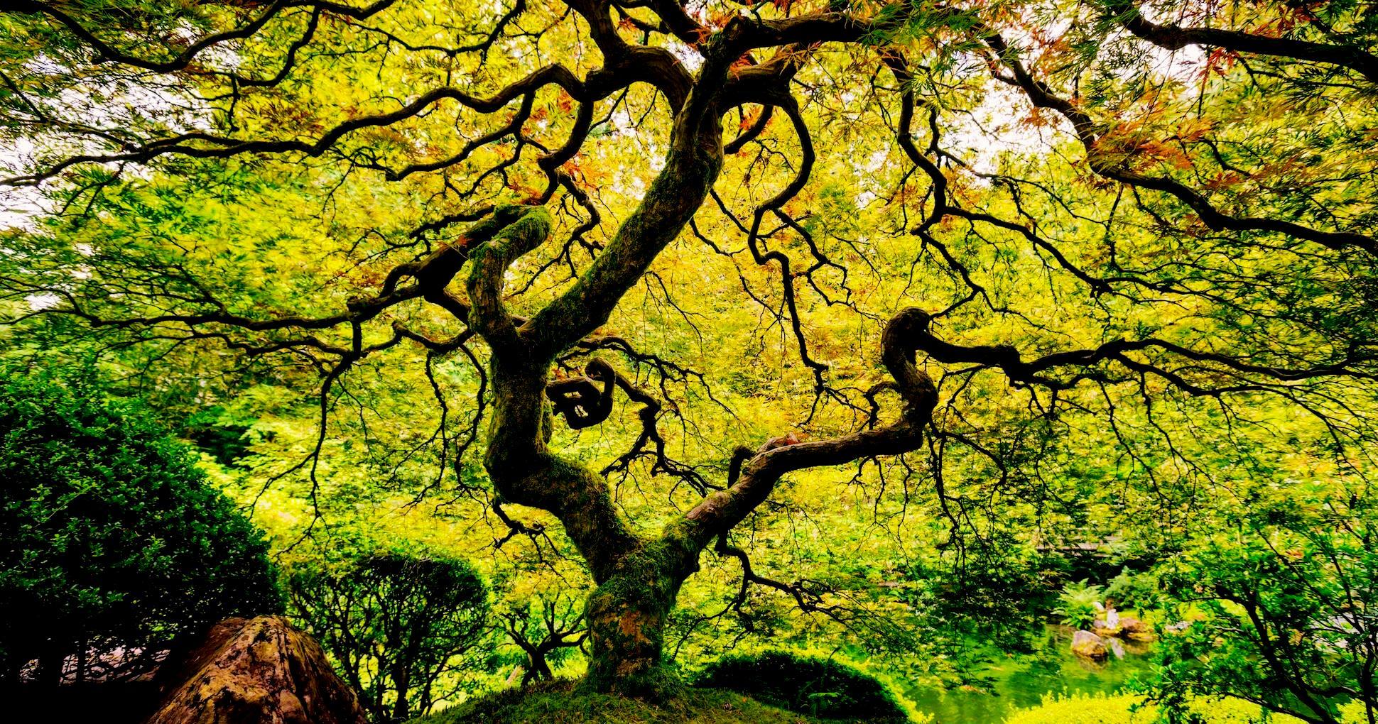 Tree, Body